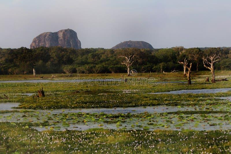 Park Narodowy Yala zdjęcie stock
