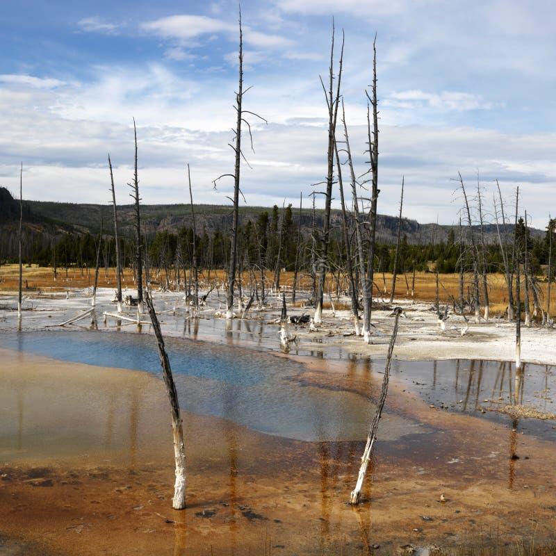 park narodowy Yellowstone obraz royalty free