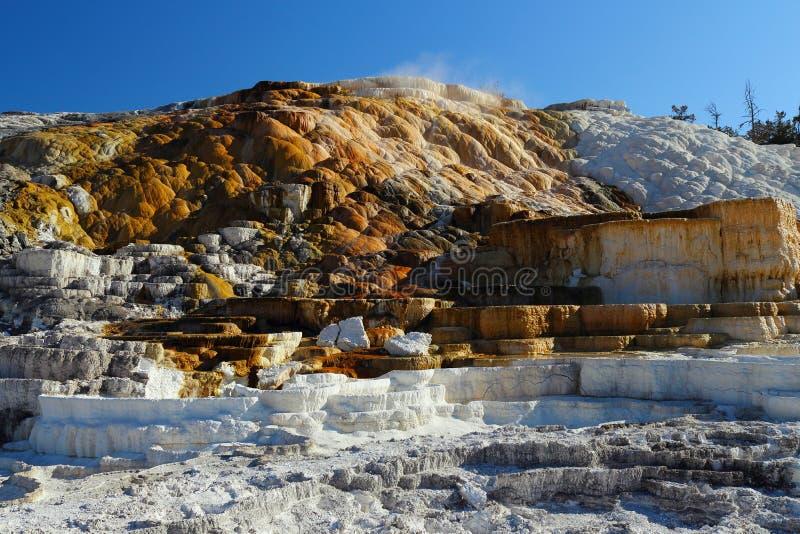 Park Narodowy Yellowstone, Wyoming, USA, Wieczór na tarasach Minerva w Mammoth Hot Springs fotografia stock