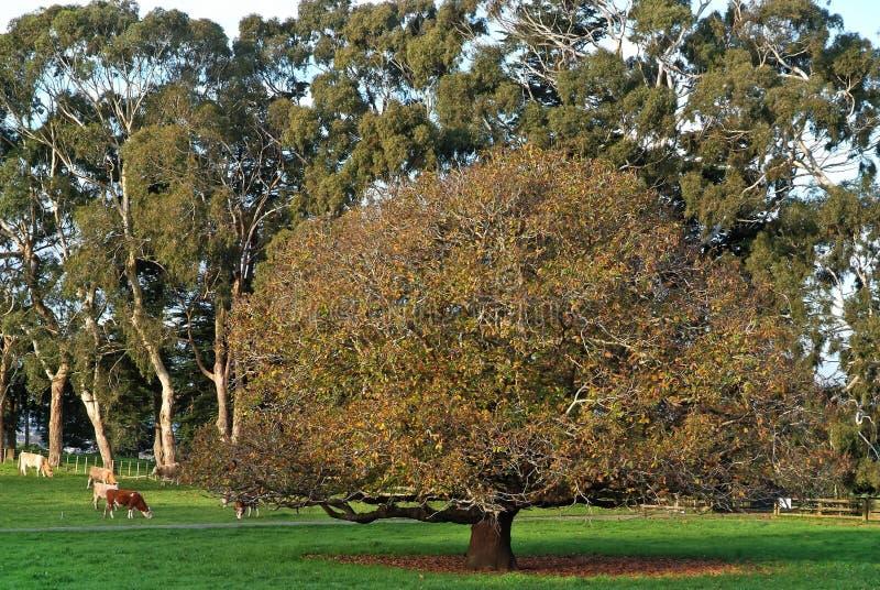 Park in Nieuw Zeeland stock fotografie