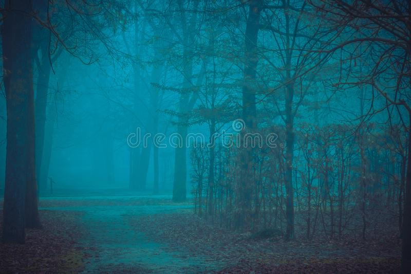 Park in night. Misty park in night. Autumn nature landscape royalty free stock image