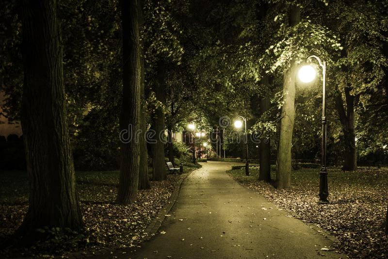 Park Night Scenery royalty free stock images
