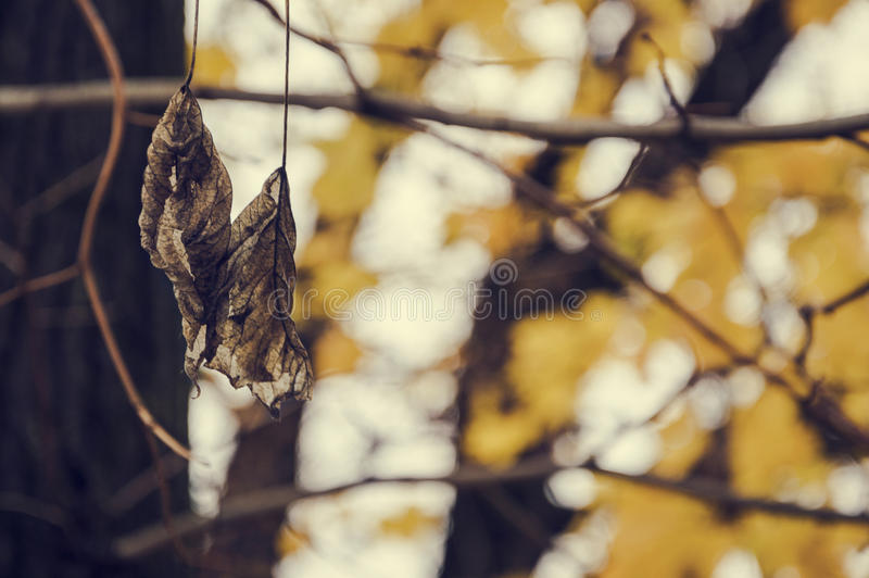 In the park royalty free stock photography