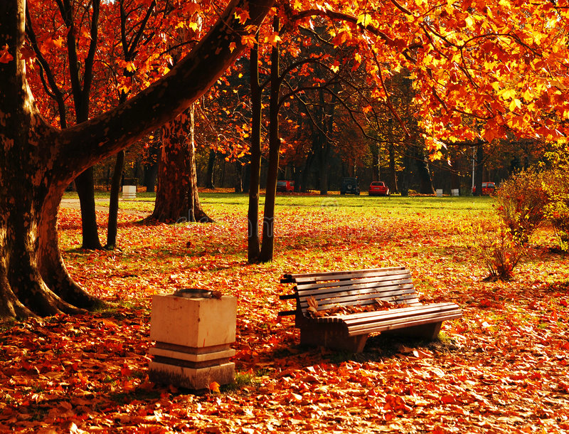 Park in November royalty free stock photos