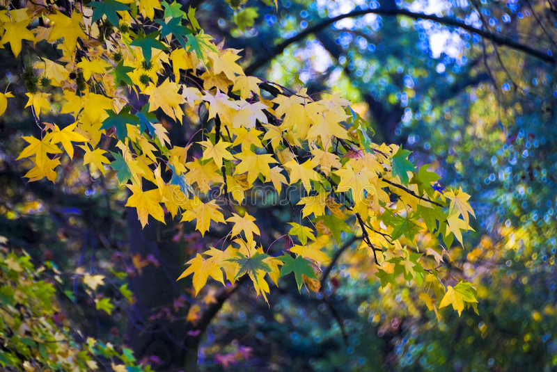 Park in November royalty free stock photography