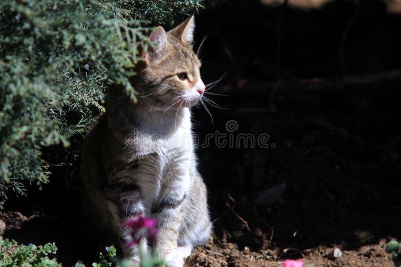Park,cat, Nyavaran, Tehran, Iran royalty free stock image