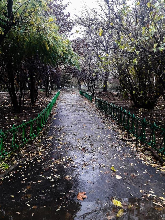 Park på en regndag i Bukarest, Rumänien, 2019 arkivfoto
