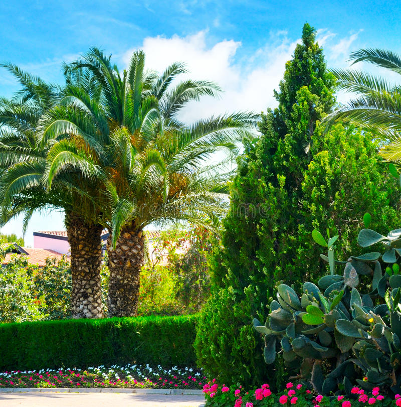 Download Park With Palm Trees And Evergreen Plants Stock Photo - Image of leaves, leaf: 83706756