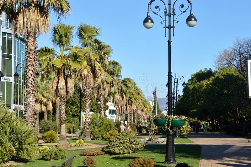 Park with Palm trees royalty free stock photos