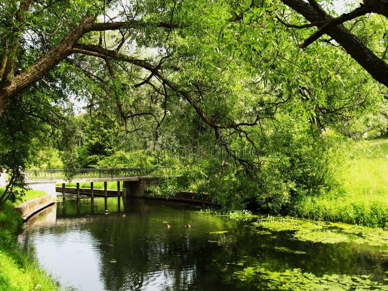 Park in Pavlovsk stock image