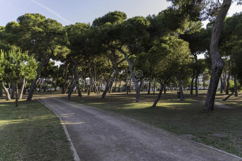 Pinewood in Castellon, Spain. Park pinetrees in Castellon, Spain stock images