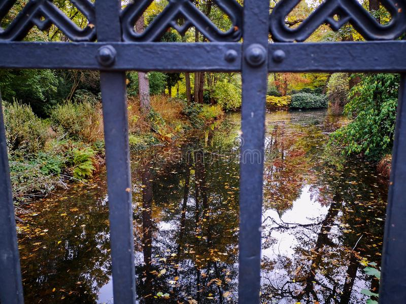 Park pond covered with autumn leaves, view through bridge railing royalty free stock photo