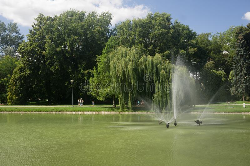 Park on a pond in Kielce, Poland. Beautiful park in the town of Kielce in Poland with a pond in summer royalty free stock photo