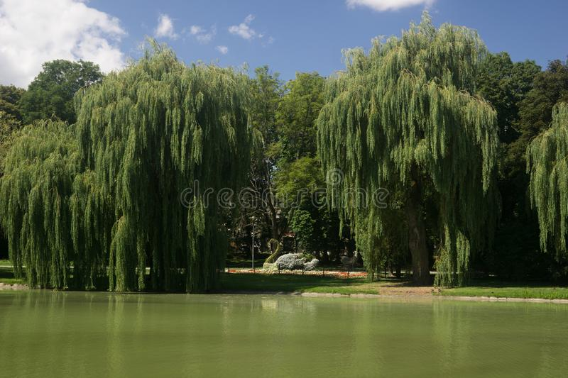 Park on a pond in Kielce, Poland. Beautiful park in the town of Kielce in Poland with a pond in summer stock photo