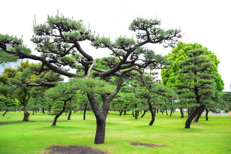 Park przed Cesarskim pałac, Tokio, Japonia obrazy royalty free