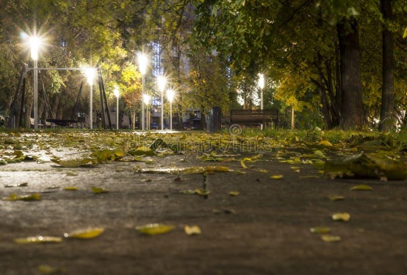 Park after rain at autumn. background. Park after rain at autumn night. background royalty free stock photos
