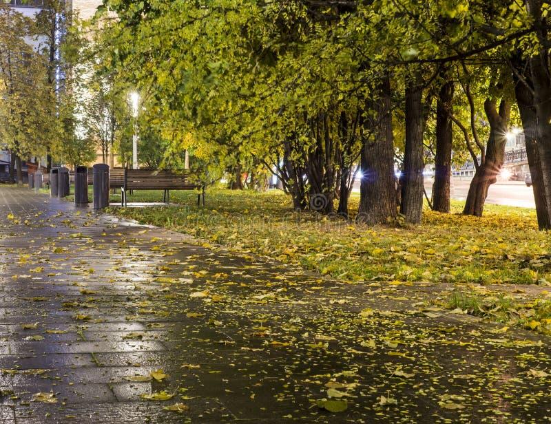 Park after rain at autumn. background. Park after rain at autumn night. background stock photos