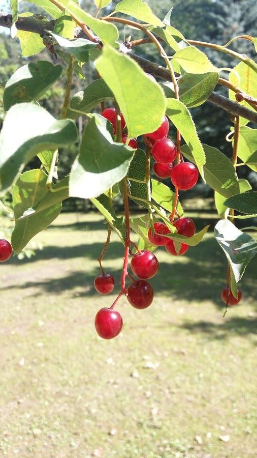 Park redberry lizenzfreie stockfotos