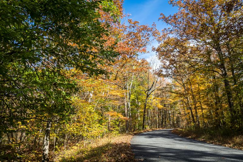 Park road lined with trees covered in brilliant fall foliage in yellow, orange, red against a vivid blue sky. On a sunny afternoon royalty free stock photos