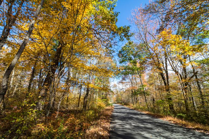 Park road lined with trees covered in brilliant fall foliage in yellow, orange, red against a vivid blue sky. On a sunny afternoon stock image