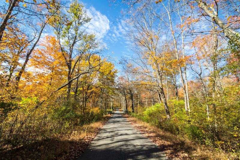 Park road lined with trees covered in brilliant fall foliage in yellow, orange, red against a vivid blue sky. On a sunny afternoon stock images