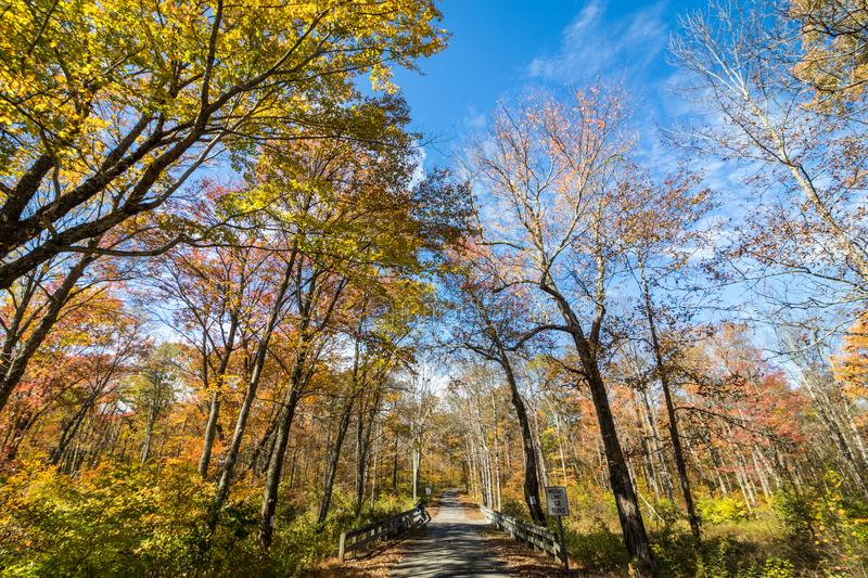Park road lined with trees covered in brilliant fall foliage in yellow, orange, red against a vivid blue sky. On a sunny afternoon stock photos