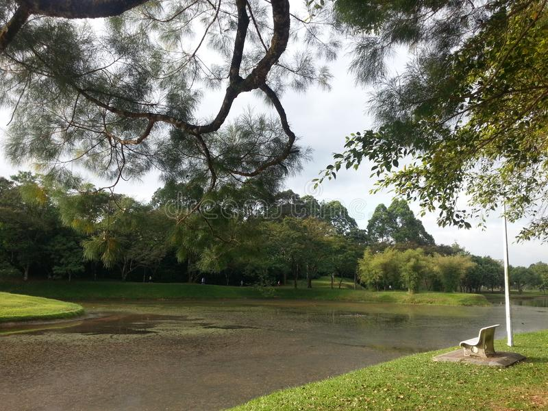 The park& x27;s green meadows by the river. Parks, natural stock photo