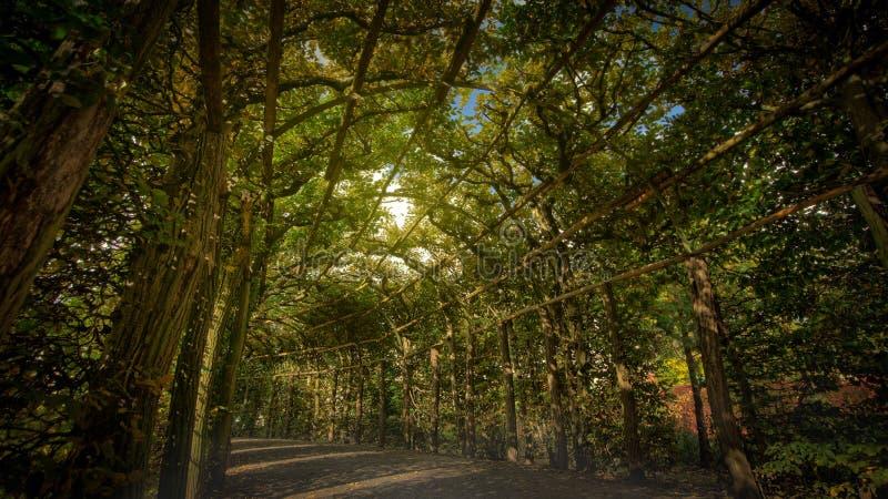 Park Sanssouci Palace Garden Green Allee. HDR image part of garten oktober 2017 stock image