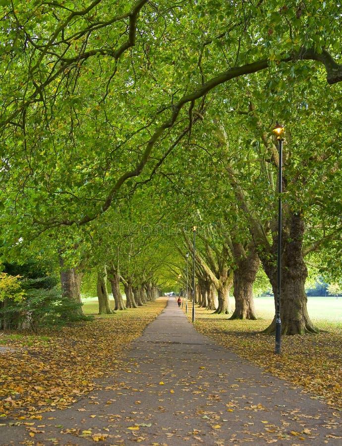 Park Scene from Cambridge, UK royalty free stock photography