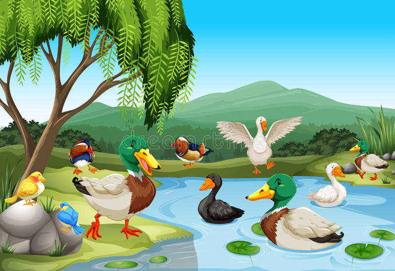 Park scene with lots of ducks and birds vector illustration