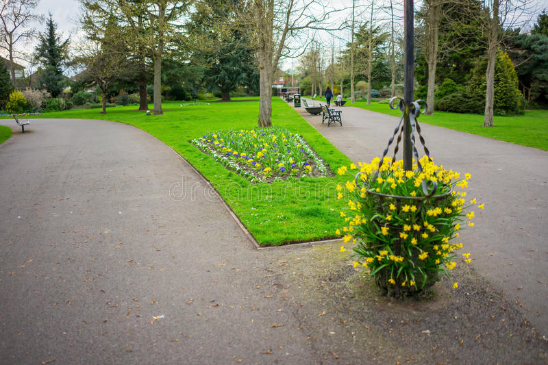 Park setting in spring lush foliage bare trees. Flowers in Springtime rural scene with a pathway in the UK stock photography