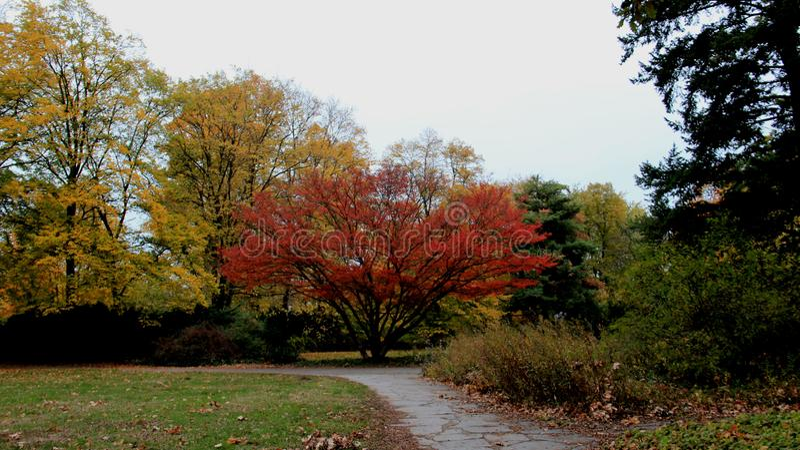 Park Sezon zmiany Kolorowi Spada liście zdjęcia stock