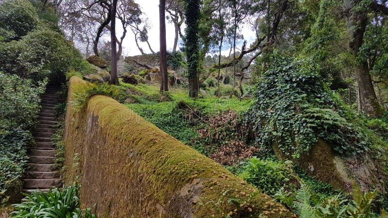 Park in Sintra stockbilder