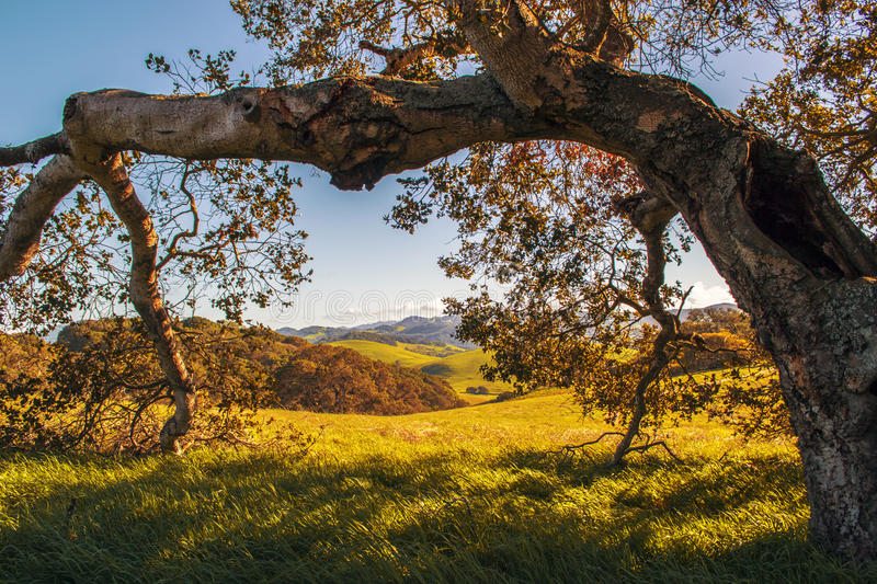 Park in Sonoma County. View of trees, fields and meadows in a big park in the town of Petaluma in Sonoma County of Northern California royalty free stock photography