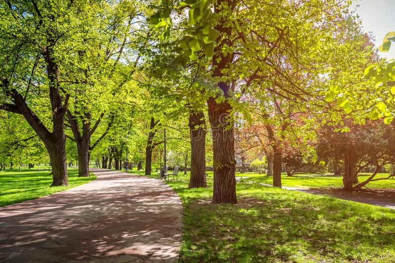 Park in the spring with green lawn, sun light. Stone pathway in stock photo
