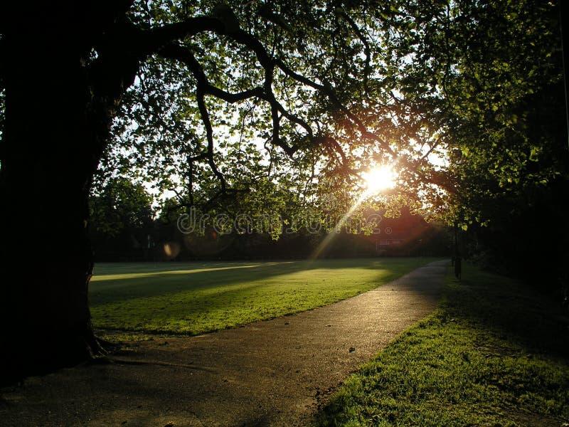 Park Sunrise stock image