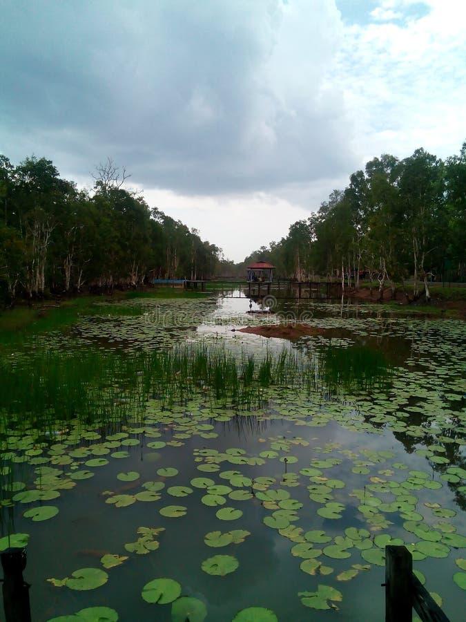 Park. Taman Wasur Merauke Papua Indonesia royalty free stock photo