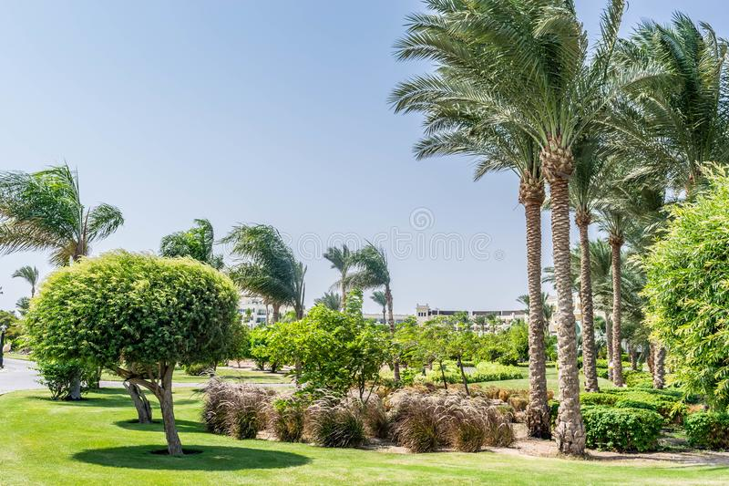 Park on the territory of a five star hotel stock images
