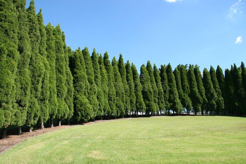 park trawy okładziny rzędu drzew fotografia stock