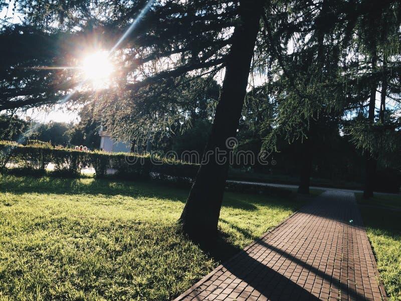Park Tree royalty free stock photography