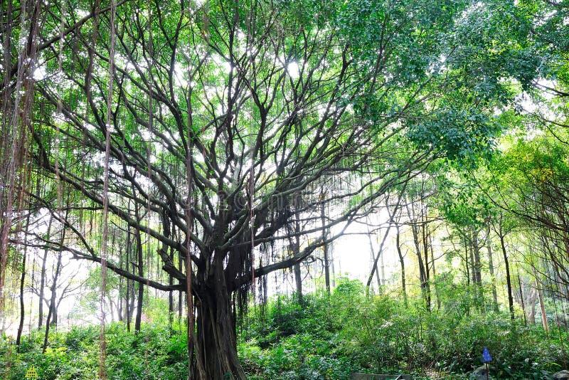 Park tree stock photos