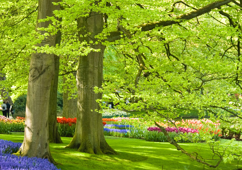 Download Park With Trees And Flowers Stock Photo - Image of holland, daffodil: 8321408