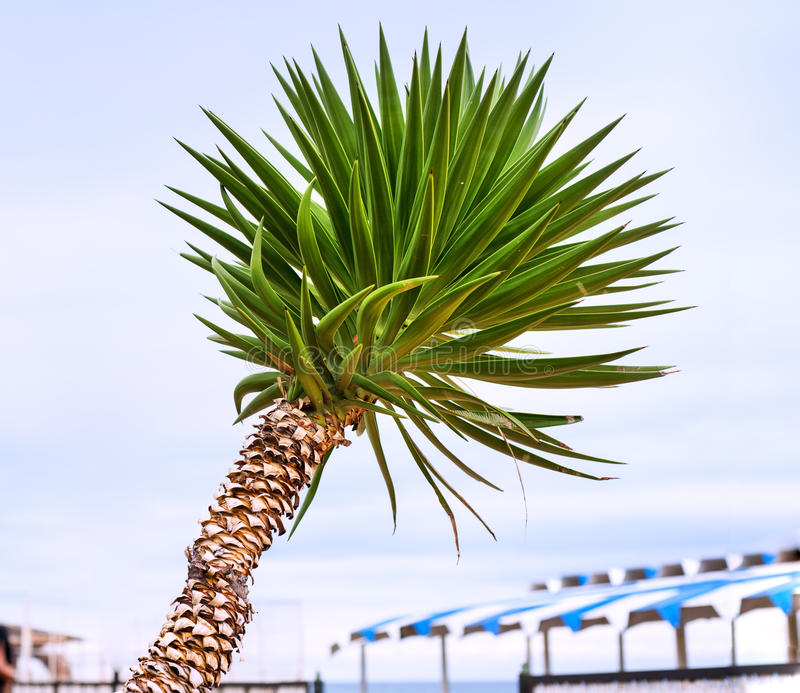 Download Park with tropical palms stock image. Image of isolated - 33315665