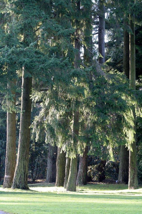 Park und Baum stockfotografie