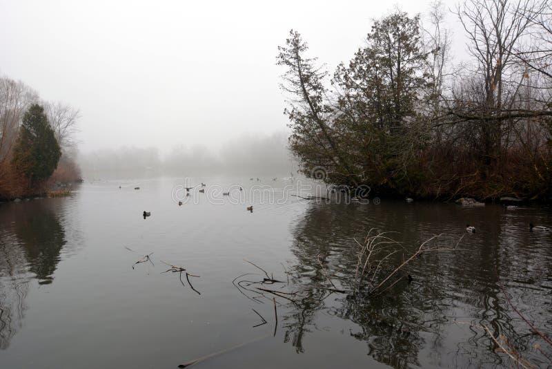 Park und See in Richmond Hill in Toronto in Kanada morgens im Winter lizenzfreie stockbilder