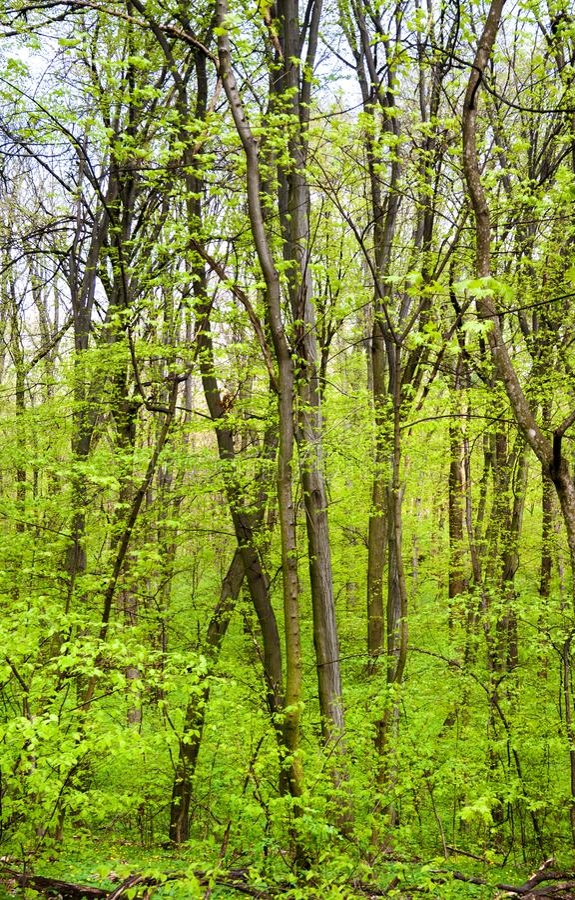 Park van de Holosiivskyi het Nationale Aard in Kyev, de Oekraïne royalty-vrije stock afbeelding