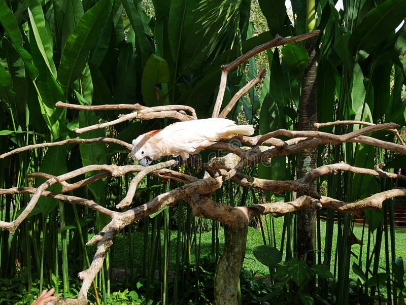 Park van vogels en reptielen in Bali, papegaaiaronskelken stock fotografie