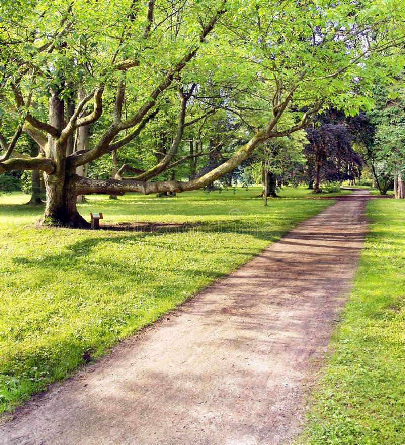 Park and very old tree. A view of the park and very old tree royalty free stock images