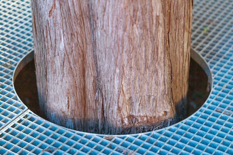 Park von Bäumen, Stamm im Park stockfoto