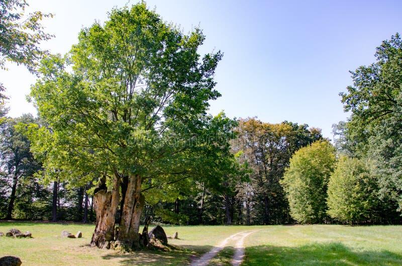 Park von Muskau, ckler-parque del ¼ del rst-PÃ del ¼ del lub FÃ del parque de Muskauer, akowski del ¼ de MuÅ del parque imágenes de archivo libres de regalías